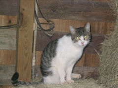 photo of barn cat Taz